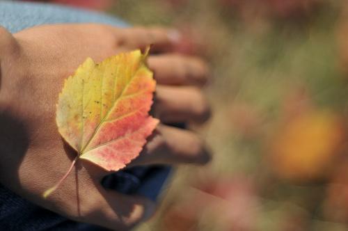 daun tangan